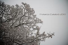 (Marco Calabro') Tags: winter snow tree canon eos bokeh neve 1750 tamron albero inverno marche tamron1750 1000d canoneos1000d