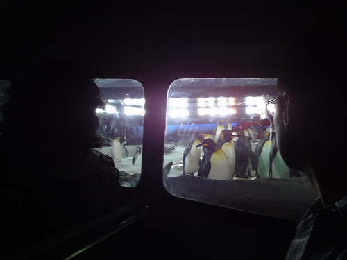 Kelly Tarlton's Penguins