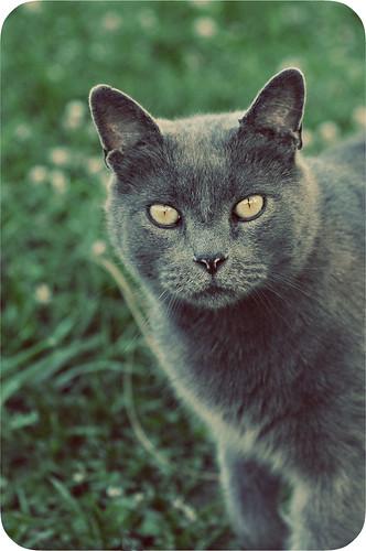 Grey Boy
