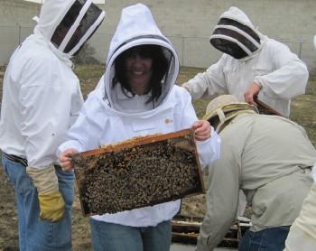 beekeeping 043 (350 x 278)