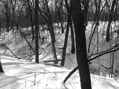 Willow Springs Woods Winter