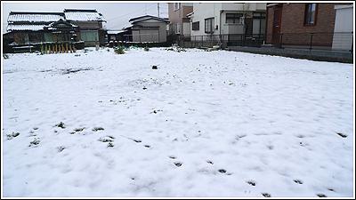 2010年3月10日の朝は雪模様