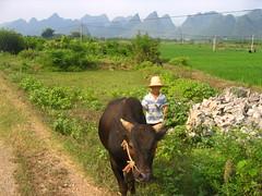 china jean 502 (cera1985) Tags: china guilin yangshuo south lijiang guanxi