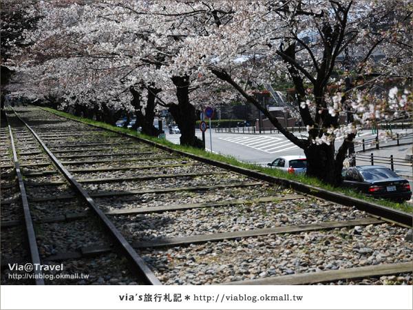 【via京都賞櫻行】鐵道上的櫻花美景~蹴上鐵道12