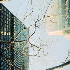 Asymmetry (thericyip.com) Tags: blue sky tree 120 6x6 tlr film buildings kodak branches asymmetry e6 yashicamatem kodakektachrome400x