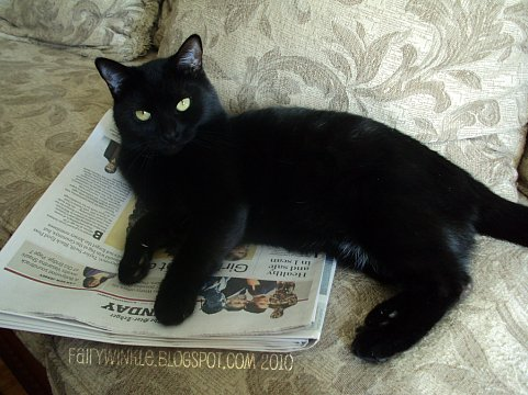 newscat