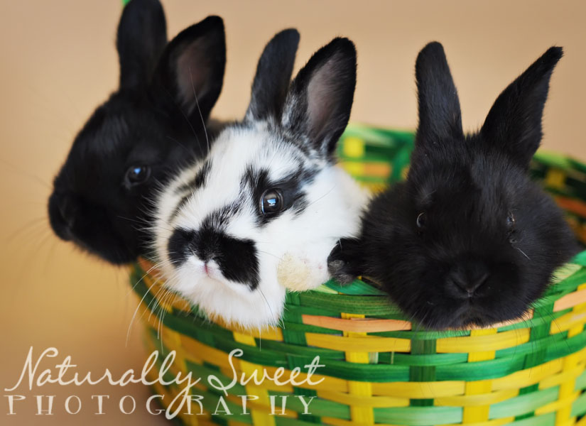 bunnies rs