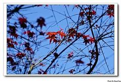 台北奧萬大楓葉
