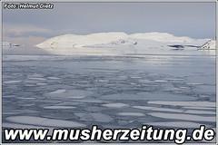 Finnmarkslopet: Kirkenes-Bucht