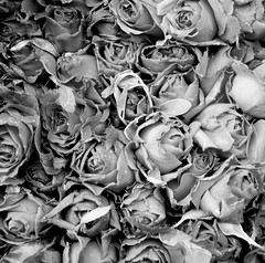 ( a S s) Tags: bw flower rose nikon sad emotion bazaar miss d90