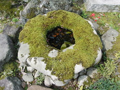 moss covered cistern