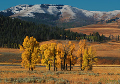 Lamar (P. Oglesby) Tags: autumn snow mountains yellowstonenp thehighlander godlovesyou lamarvalley fallfolliage theunforgettablepictures absolutelystunningscapes