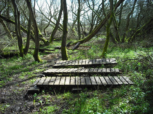 Woodwork at Croft Trail, Swindon.