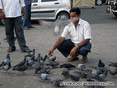 A man feeding pigeons