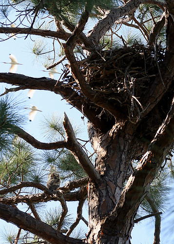 The Owl, the Nest, and the Incidental Ibises