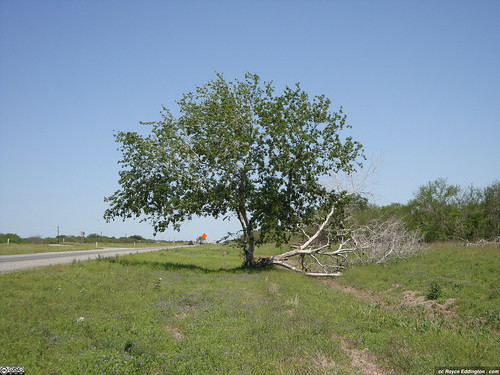 Survivor Tree 2