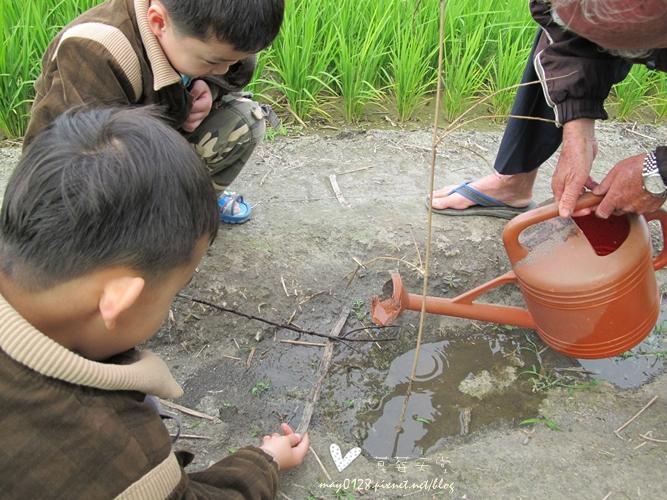 灌蟋蟀10-2010.04.04