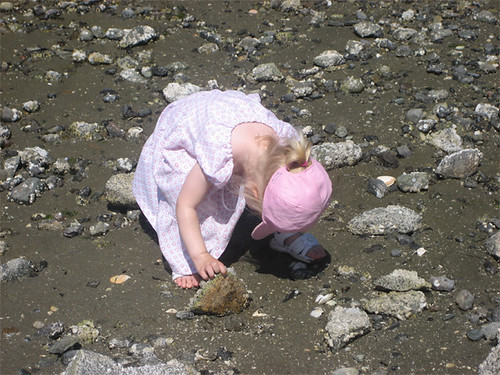 Looking for baby crabs
