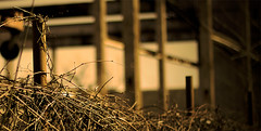 Untitled (akramer16) Tags: brown sepia canon fence dark march construction vines focus dof decay outoffocus va crop dcist dslr vignette beams girders occoquan narrowdepthoffield 50d anawesomeshot mygearandmepremium