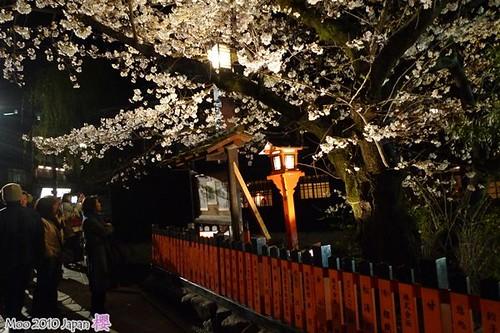 白川祇園-夜櫻5