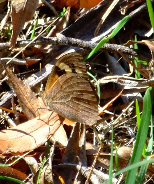 hidden butterfly01