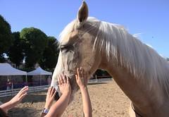 Popularit (Larch) Tags: horse france cheval child hand main 71 popular enfant cluny popularity populaire galope saneetloire bougogne spectaclequestre pyrame popularit emelinehussenetetpyrame emelinehussenet lesjeudisdecluny harasdecluny