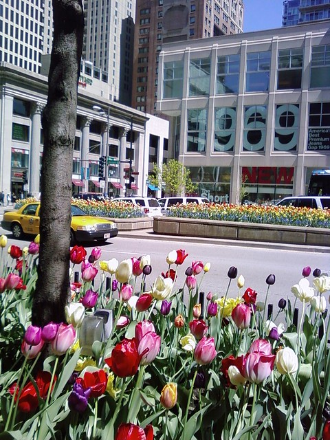 flowers michigan ave