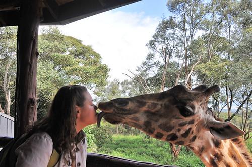 exhibition about giraf...