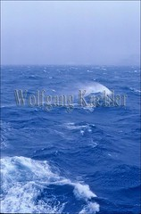 20008449 (wolfgangkaehler) Tags: ocean blue sea seascape water waves wave antarctica rough waterscape roughsea roughseas roughocean oceanscape