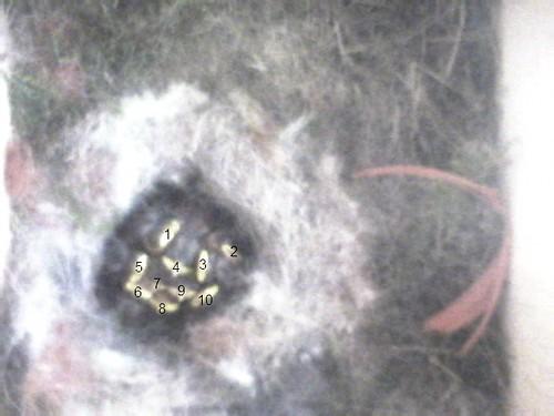 10 Nestlinge