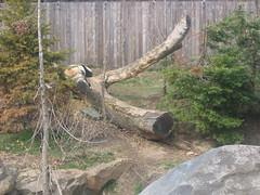 IMG_0891 (superdubey) Tags: zoo dc washington national dc08