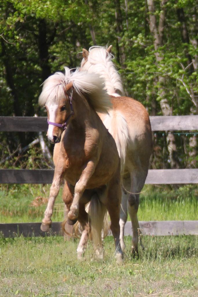 horses 211x