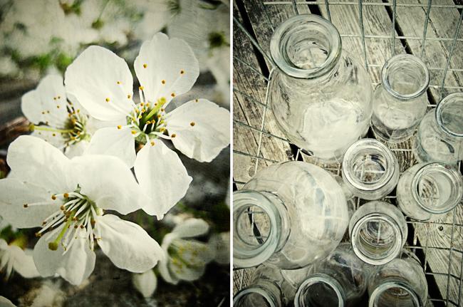 äppleblommor & mjölkflaskor