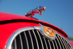 Red Jaguar Mark 1: View up at the chrome jaguar leaping off the hood/bonnet