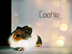 . Cookie (Juliana Coutinho) Tags: guinea pig guineapig cookie sony days da 365 juliana 2010 coutinho porquinho porquinhodandia ndia 365days ngmmemuda julianacoutinho