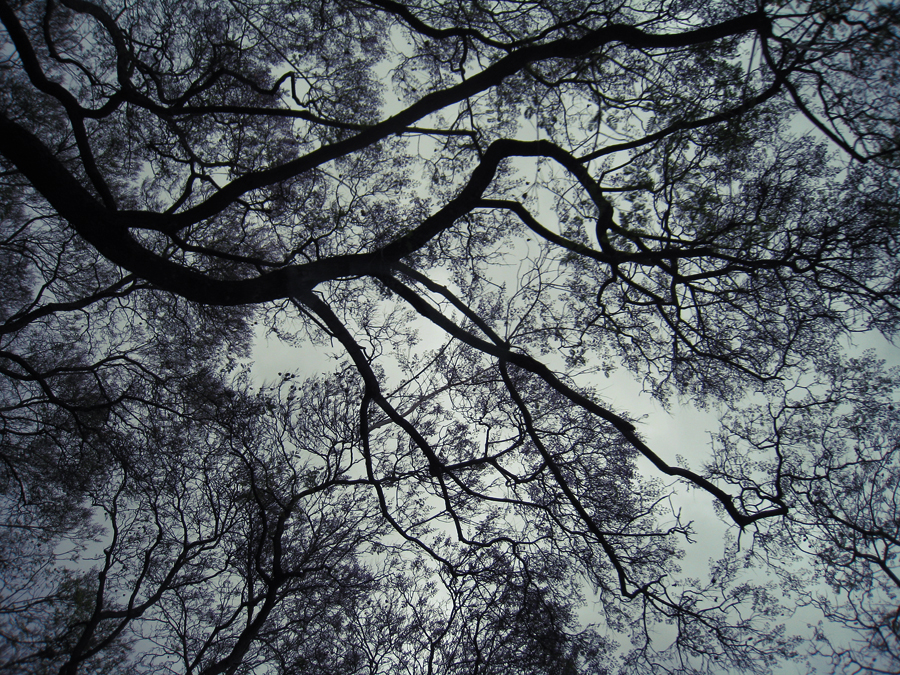 trees+branches+tree branches