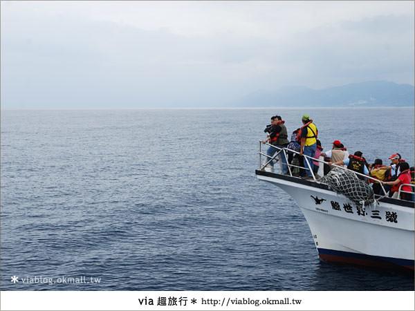 【花蓮賞鯨】花蓮玩樂趣~花蓮賞鯨之旅10
