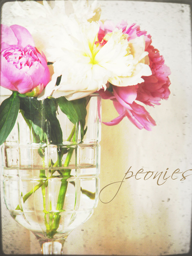 peonies {two}