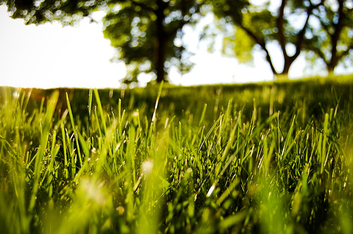 フリー写真素材, 自然・風景, 草原,