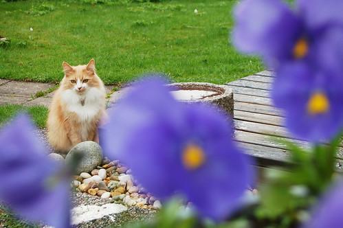 Garden ruler