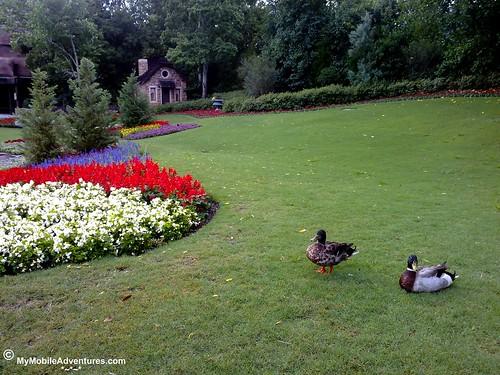 05162010848-WDW-EPCOT-Canada-ducks