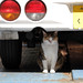 the cat under the car par OiMax