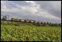 Arenero en Cameno (javier-lopez) Tags: train tren trenes railway arena japonesa arboç renfe 289 adif ffcc arenero cameno mercancías taoos 24082007 transfesa villafría bitensión l'arboç