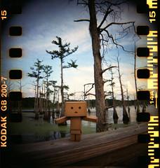Bayou Danbo (Lucy*Lou) Tags: bayou swamp blackbayou danbo bbf blackbirdfly dandoard