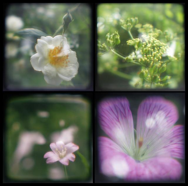 TtV -flowers