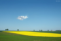Horizon (Ben Heine) Tags: camera flowers trees light summer wallpaper sky green art nature field yellow composite composition poster lens landscape photography lights freedom countrys