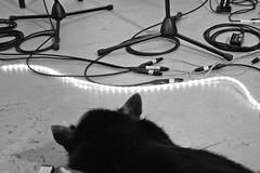 Puppy & wires