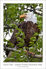 Eagle One - Grand Tetons National Park (Wil_Bloodworth) Tags: tree bird nature animal nationalpark searchthebest eagle wildlife baldeagle feathers jackson perch perched hunter wyoming tetons majestic haliaeetusleucocephalus jacksonhole nationalbird birdofprey wy talons seaeagle grandtetonnationalpark specanimal yellowstonewildlife maturebaldeagle