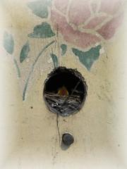 Baby Wrens 1
