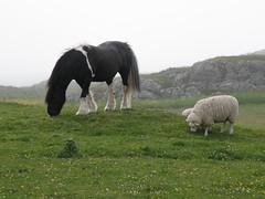 Isle of Iona (annie in alba) Tags: iona isle